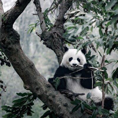 Quadro Panda na árvore
