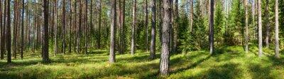 Quadro Panorama da floresta do verão