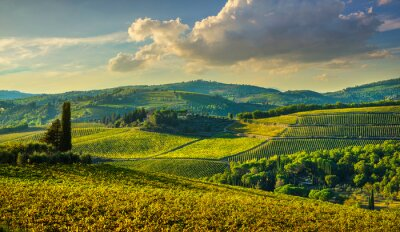 Quadro Panzano in Chianti vineyard and panorama at sunset. Tuscany, Italy