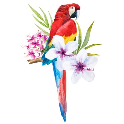 Quadro Papagaio da aguarela