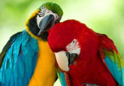 Quadro papagaios