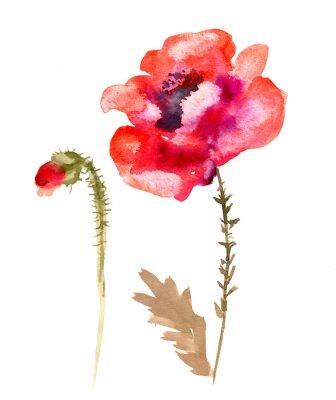 Quadro Papoila da flor da aguarela