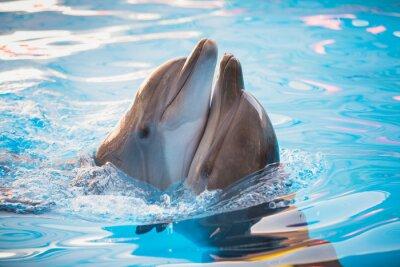 Quadro par de golfinhos que dançam na água