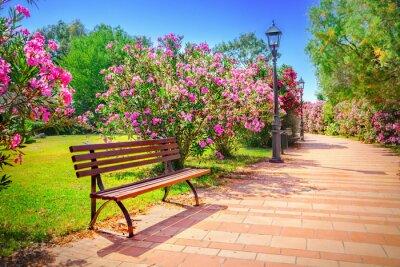 Quadro Parque da Cidade
