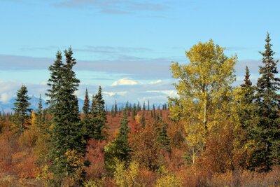 Quadro Parque Nacional Denali no outono