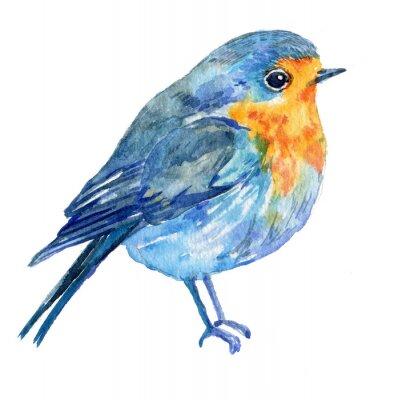 Quadro Pássaro, branca, fundo .illustration, watercolour
