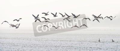 Quadro Pássaros voando sobre um campo nevado no inverno