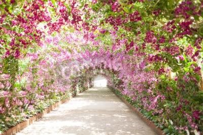 Quadro passeio em um jardim botânico com as orquídeas que revestem o caminho.