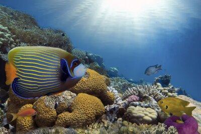 Quadro Peixes tropicais no recife de corais
