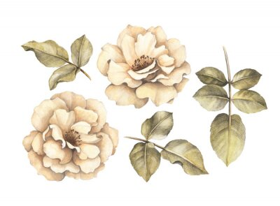 Quadro Pencil drawing of roses