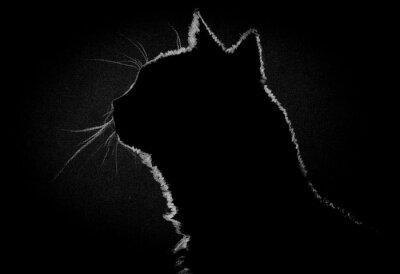 Quadro Perfil gato no escuro
