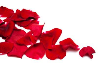 Quadro Pétalas de rosas vermelhas