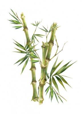 Quadro Pintura em aquarela ilustração de folhas de bambu, sobre fundo branco