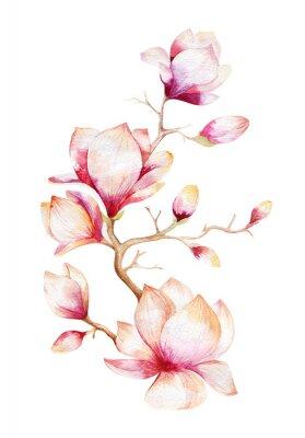 Quadro Pintura Papel de parede de flor de magnólia. Mão desenhada aguarela floral