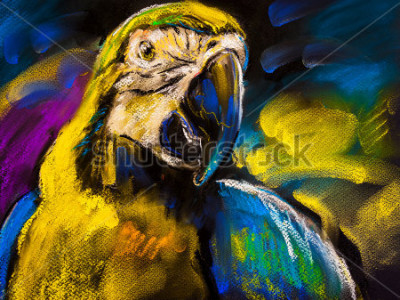 Quadro Pintura pastel original no cartão. Pintura moderna de um papagaio bonito
