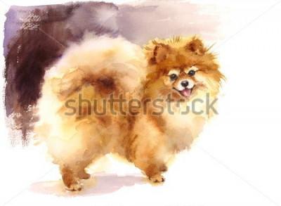 Quadro Pomeranian Aquarela, animais de fofos