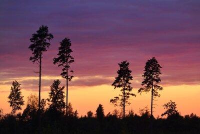 Quadro Pôr do sol, rural, área