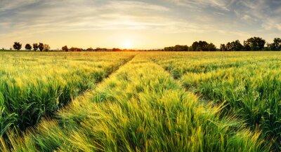 Quadro PREÇO / INFO Adicionar à Mesa de Luz trigo, campo, paisagem, caminho, pôr do sol