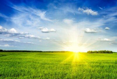 Quadro Primavera, verão, verde, campo, paisagem, lanscape