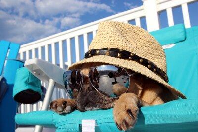 Quadro Pug de relaxamento na cadeira de praia