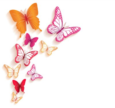 Quadro Realistic Colorful Butterflies Isolated for Spring