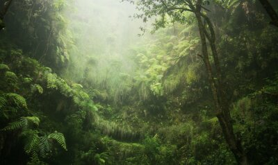 Quadro Regenwald tropisch nass abenteuer