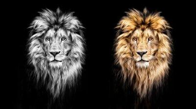 Quadro Retrato, bonito, leão, leão, escuro, óleo, tintas