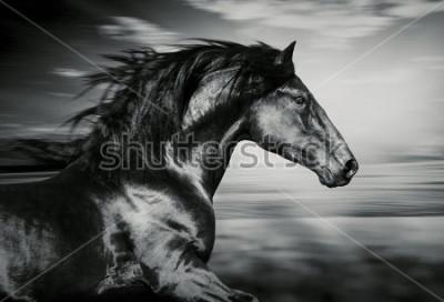 Quadro retrato de cavalo espanhol em execução, foto preto e branco
