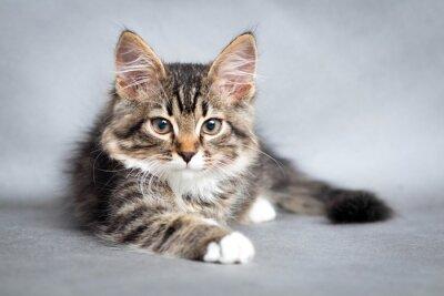 Quadro Retrato de mentir gato