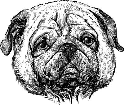 Quadro retrato do pug