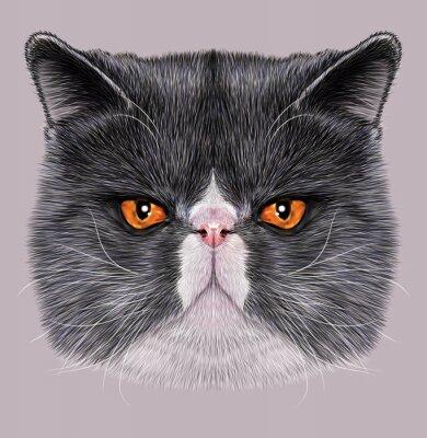 Quadro Retrato ilustrativo de Maine Coon. Gato doméstico bicolor bonito com olhos verdes.