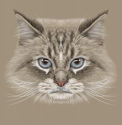 Quadro Retrato ilustrativo do gato Siberian. Gato bonito do ponto da cor doméstica com olhos azuis.