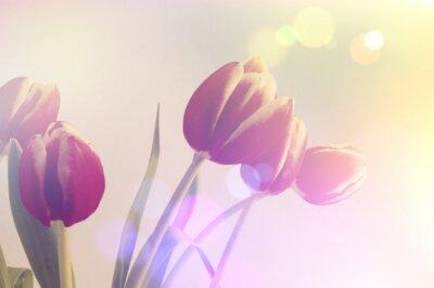 Quadro Retro tulipas