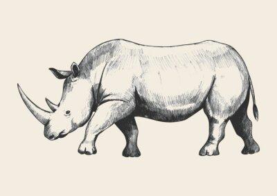 Quadro Rhino Sketch