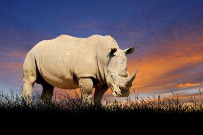 Quadro Rinoceronte, fundo, pôr do sol, céu