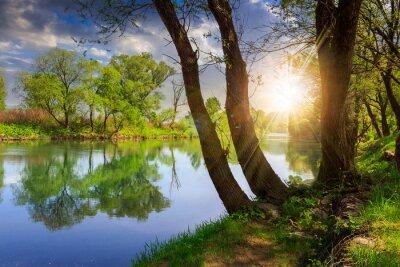 Quadro rio da floresta com pedras e grama ao pôr do sol