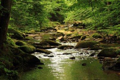 Quadro rio na floresta