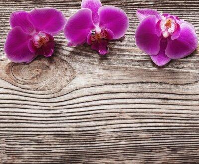 Quadro Rosa, orquídea, flores, madeira, fundo
