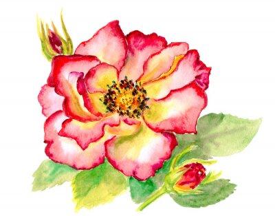 Quadro Rosa vermelha brilhante do watercolour do vintage