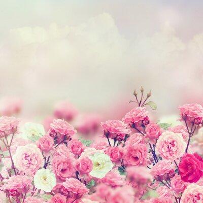 Quadro Rose Flores