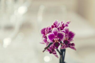 Quadro Roxo, flor, flor, cremoso, branca, fundo