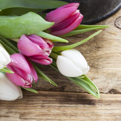 Quadro Roxo, tulipa, primavera, conceito, vindima, bandeja, madeira, tabela