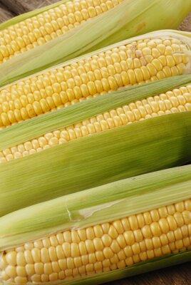 Quadro sabugo de milho