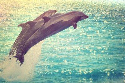 Quadro saltando golfinhos