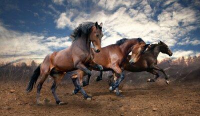 Quadro salto selvagem baía cavalos