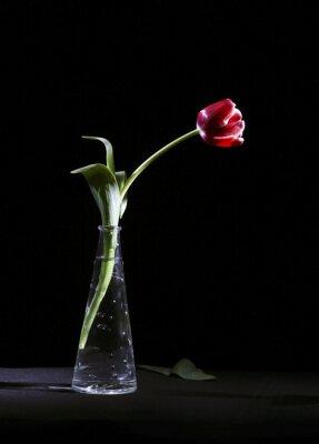Quadro Samotny tulipan