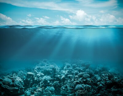 Quadro Sea or ocean underwater deep nature background