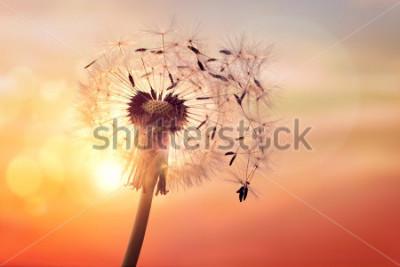 Quadro Silhueta de dente de leão contra o pôr do sol com sementes ao vento