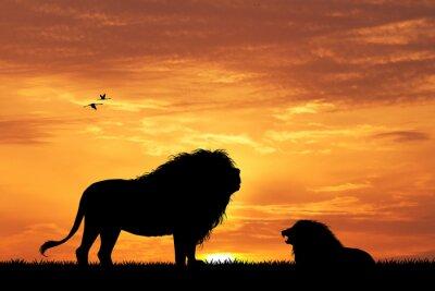 Quadro Silhueta do leão no por do sol