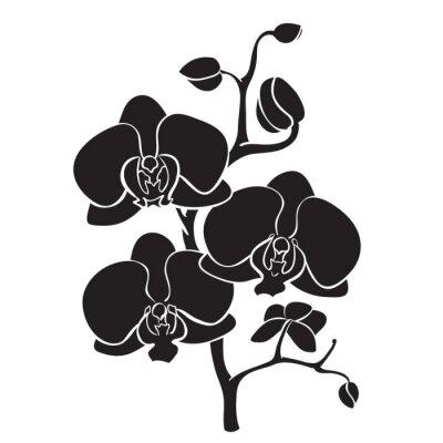 Quadro Silhueta filial da orquídea